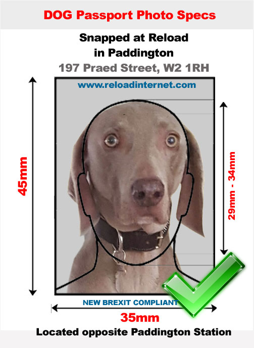 Dog and Pet Passport Photo