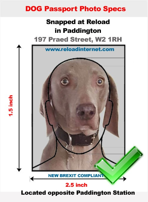 Pet passport photo